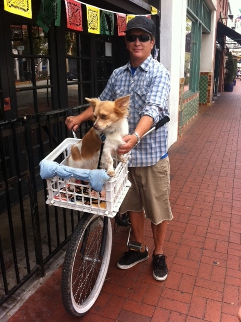 Biker mutt in a makeshift crate-basket